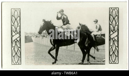 Piastoon, Australian race horse, owned by R H Edkins, trainer E Fisher. Winner of seven races.        Date: circa late 1920s - Stock Image