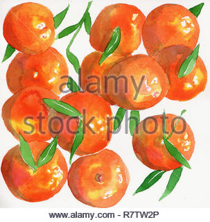 Watercolor painting of satsuma oranges - Stock Image