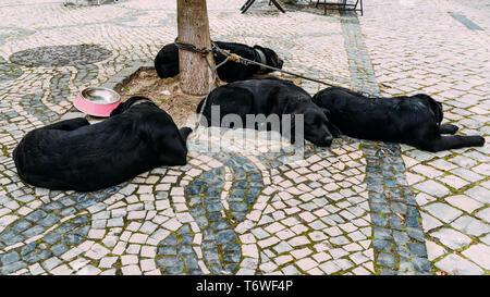 Adorable black lab mix black Labrador dogs asleep on the street in Aveiro, Portugal, despite activity all around them. - Stock Image