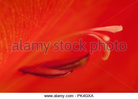Flower Stamens - Stock Image