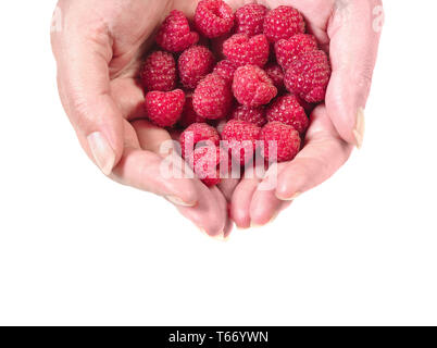 Close up of woman hands holding raspberries top view cut out. Healthy eating concept - Stock Image
