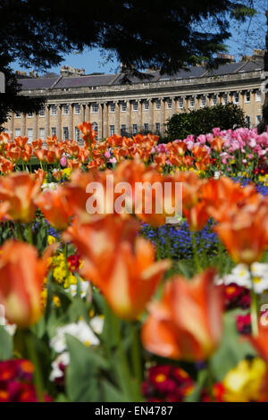 Royal Crescent, Bath, UK, with beautiful tulips in foreground - Stock Image