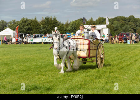 Heavy horse and milk cart turnout of The Little Dairy in the main ring at the Lancashire Game and Country Fair 2015. - Stock Image