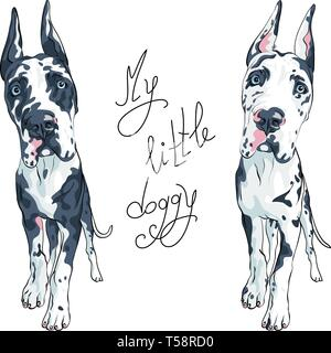 vector spotted dog Great Dane breed - Stock Image