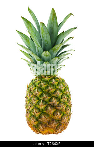 ananas comosus pineapple isolated on white background - Stock Image