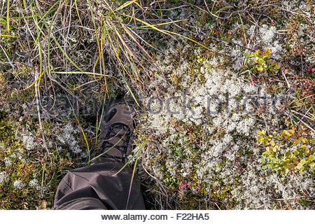 Shoe sinking into the thick spongy tundra in Denali national park - Alaska - Stock Image