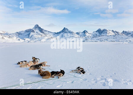 Dog sledding, E. Greenland - Stock Image