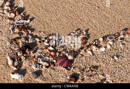 Shells and marine life washed up on Moses Rock beach, Western Australia - Stock Image