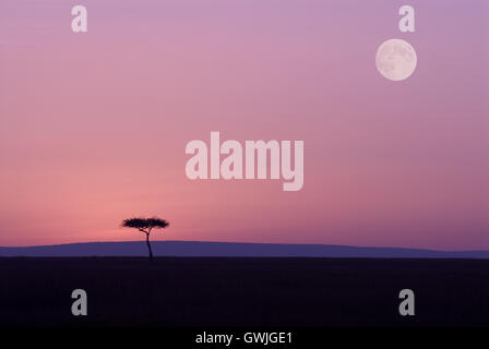 Silhouette landscape of tree in pink with moon on horizon. Africa - Stock Image