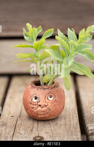 Funny looking flower pots - Stock Image
