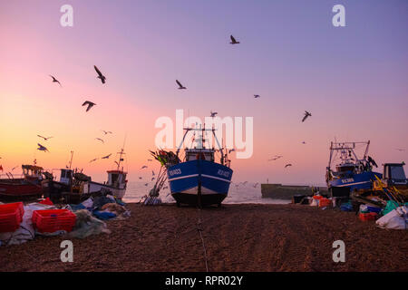 Hastings, East Sussex, UK. 23rd February 2019. Seagulls swirl round Hastings fishing boat at a misty sunrise on a very mild morning on the Stade Old Town beach, on what promises to be a warm and sunny day. Credit: Carolyn Clarke/Alamy Live News - Stock Image