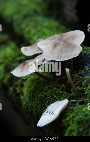 Fungi on moss covered branch - Stock Image