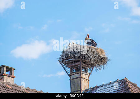 Storks In A Nest - Stock Image