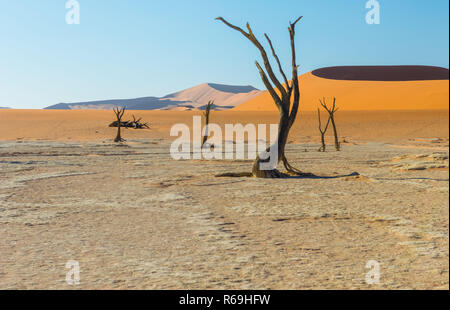 Desert With Withered Trees Namib Namibia - Stock Image
