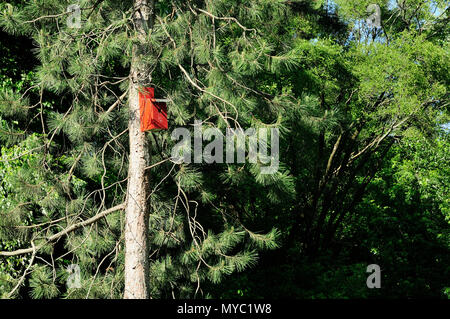 Red birdhouse in pine tree - Stock Image