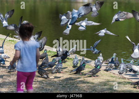 Girl chasing pigeons, Osterley Park, Isleworth, Middlesex, England