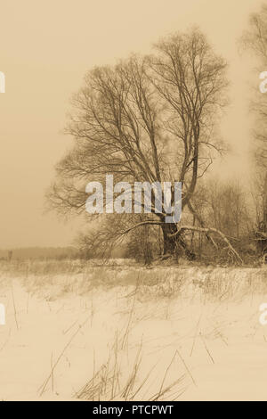 wintertime and lonely tree in Estonia, Europe - Stock Image