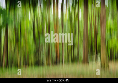 vertical motion blurry summer forest scene - Stock Image