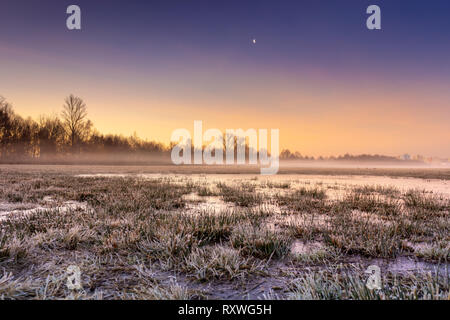 Cold morning in the swamp under the sunrise. - Stock Image