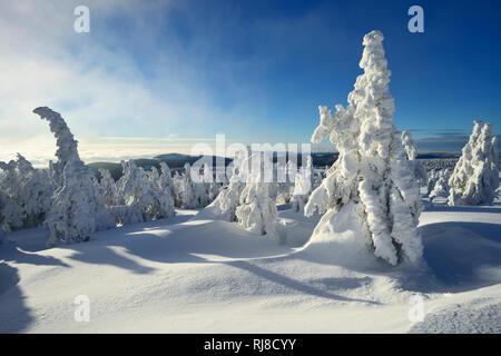 Deutschland, Sachsen-Anhalt, Nationalpark Harz, Winter auf dem Brocken, tief verschneite Fichten, über den Wolken - Stock Image