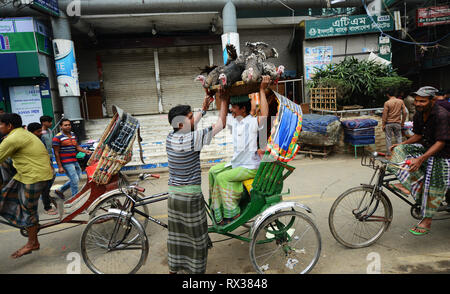 A Bangladeshi man carrying a basket full of turkeys. - Stock Image