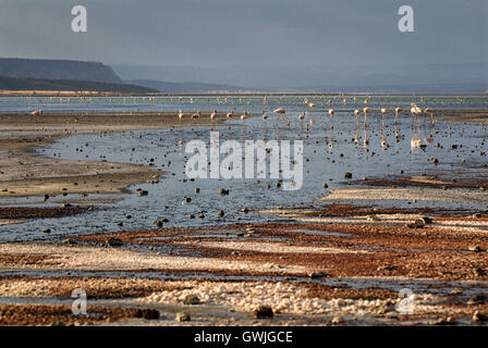 Landscape of Lake Magadi with flamingos and salt/mineral deposits on the shore. Kenya, Africa. - Stock Image
