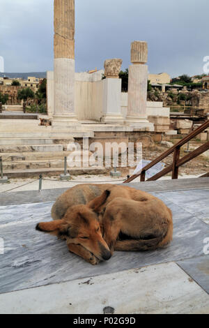 Stray dog in Athens - Stock Image