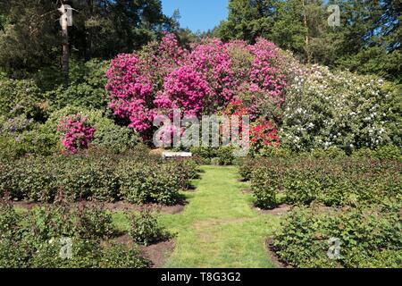 International Rose Test Garden in Portland, Oregon, USA. - Stock Image