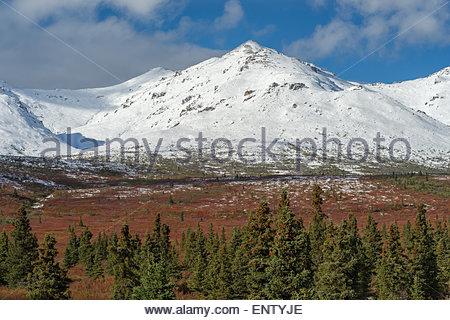 Denali national park Alaska - Stock Image