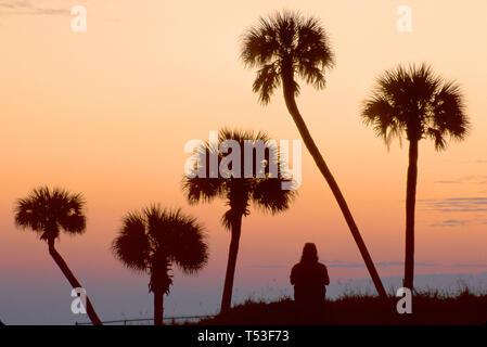 Florida Atlantic Shore Daytona Beach visitor cabbage palms natural dune dawn - Stock Image