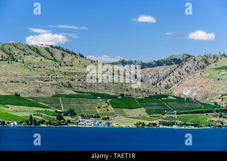 Vineyards and houses along Lake Chelan near Chelan, Washington State, USA - Stock Image