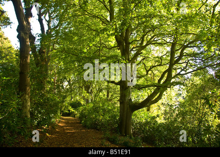 Wordsworth family home Rydal Mount and Gardens Lake District united kingdom uk thick forest - Stock Image