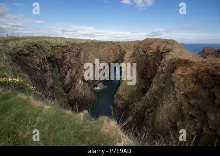 Cliffs at the Bullers of Buchan, near Cruden Bay, Aberdeenshire, Scotland, UK. - Stock Image
