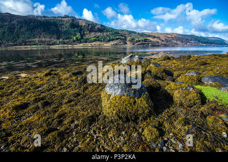 Seaweed covered boulders on the shore of beautiful Loch Sunart in the Highlands of Scotland - Stock Image