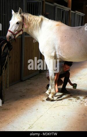 Girl taking care of her horse, Provence, France - Stock Image