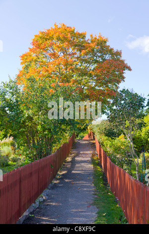 Autumn among the allotment gardens in Tanto on Sodermalm, Stockholm, Sweden - Stock Image