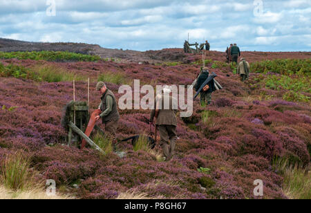 North Yorkshire, England UK - A grouse moor in early autumn as the guns make their way to the shooting butts to start the shoot - Stock Image
