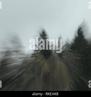 Abstract background image of silhouette of firs tree tops in coniferous forest against white clouds. Adamello park, Passo del Tonale, Italy - Stock Image