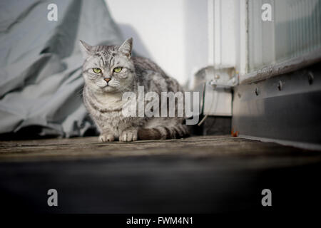 Portrait Of Cat On Footpath - Stock Image