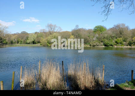 A general view of Hampstead Heath ponds - Stock Image