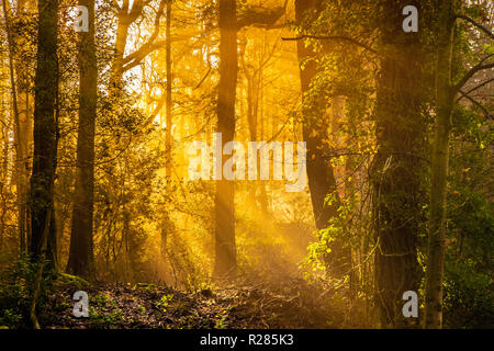 Bowness on Windermere, Lake District, England, 17th November 2018, Autumn sunlight streams through the trees. Credit: Russell Millner/Alamy Live News - Stock Image