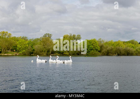Four white paddle boats in the shape of giant swans moored on a lake; part of a nature reserve attaching to Rushden Lakes Shopping Centre, UK - Stock Image