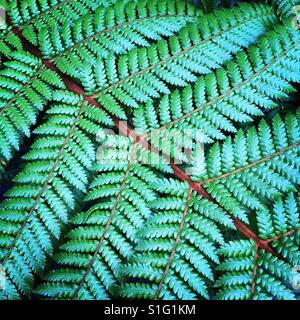 Fern plant fronds - Stock Image