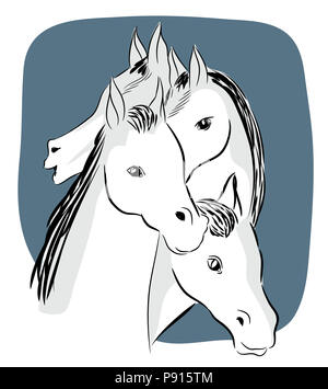 Four white horses.  illustration of four head of horsess. Four horse head from different angles. - Stock Image