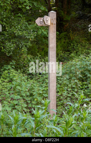 A woodland fingerpost with acorns - Stock Image