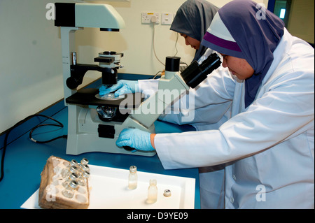 Scientists analyzing the water samples taken at sea, Brunei - Stock Image