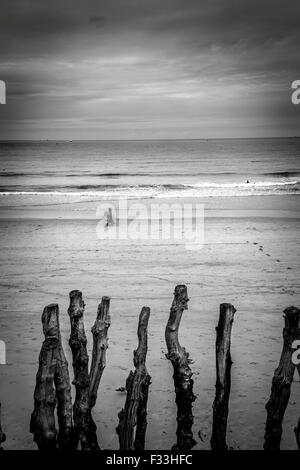 Barrier of wooden posts on a beach, Saint Malo, Brittany, France, Europe. - Stock Image
