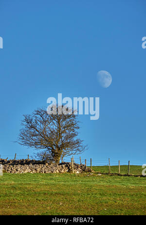 Moon over drystone wall.  Near Taddington, Peak District National Park, Derbyshire, England. - Stock Image