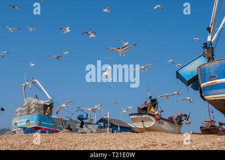 Hastings, East Sussex, UK. Seagulls swirl round Hastings fishing boats on a warm, sunny day on the Old Town Stade fishermen's beach. With more than 25 boats Hastings has the largest beach-launched commercial fishing fleet in Europe. - Stock Image