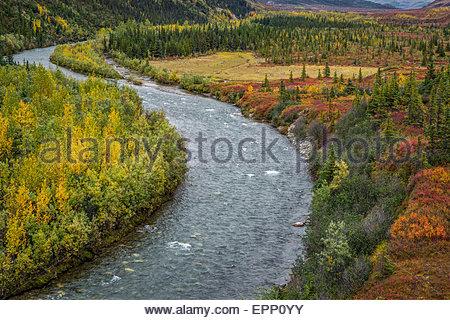 Moose creek near North Face Lodge in Denali national park - Alaska (USA) - Stock Image